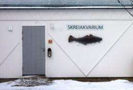 An aquarium for Skrei is seen in Norway's Arctic archipelago Lofoten