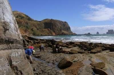 Ancient Antarctic treasure trove discovered