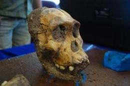 Ancient human ancestors had unique diet, according to study involving CU Boulder