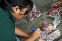 An environment officer checks pangolin meat after it was seized at the Palawan airport