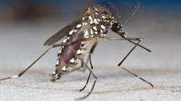 An eye for the tsetse fly