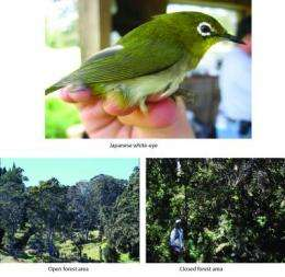 An introduced bird competitor tips the balance against Hawaiian species