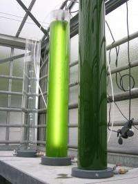 A project to research biological and chemical aspects of microalgae to fuel approach