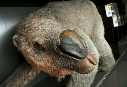 A reconstructed model of the mega-wombat at the Australian Museum