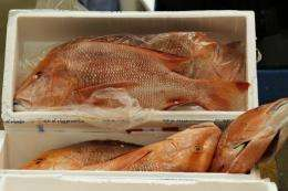 "As Asians became more prosperous, they prefer to eat more ""high-value"" fish species, such as groupers"