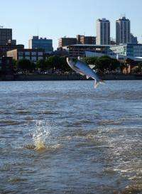 Asian carp pose an increasing problem in Midwestern US waters