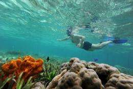 A tourist snorkles over coral reef in Raja Ampat's Mansuar Island located in eastern Indonesia's Papua region