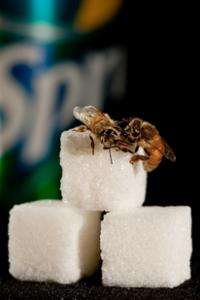 Bee research sheds light on human sweet perception, metabolic disorders