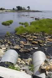 Bioremediation used to alleviate surface water pollution
