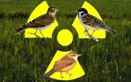 Bird populations near Fukushima are more diminished than expected