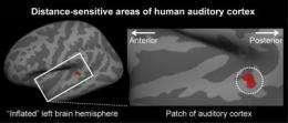 Brain area identified that determines distance from which sound originates