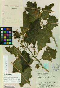 Brave new world: Pioneering electronic publication of new plant species