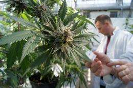 Could cannabis-derived medicine help type ii diabetes sufferers?