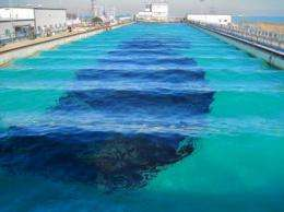 Can sound science guide dispersant use during subsea oil spills?