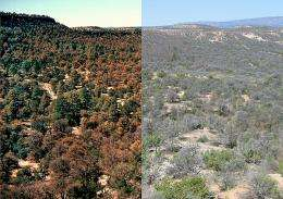 Chronic 2000-04 drought, worst in 800 years, may be the 'new normal'