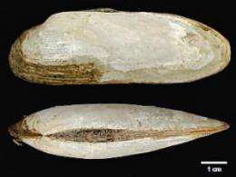 Clam fields found at deep, low-temperature Mariana vents