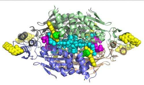Researchers use SSRL to decipher structural details of deadly enzyme