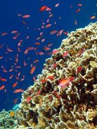 CO2 emissions reportedly cause changes in the chemical environment of the water in which fish and other species live