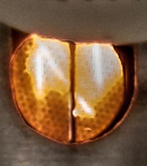 Coming Soon: Tabletop Molecular Movies
