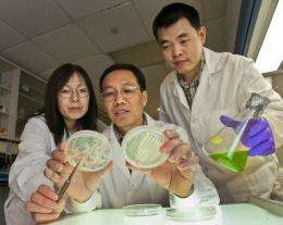 Carbon is key for getting algae to pump out more oil