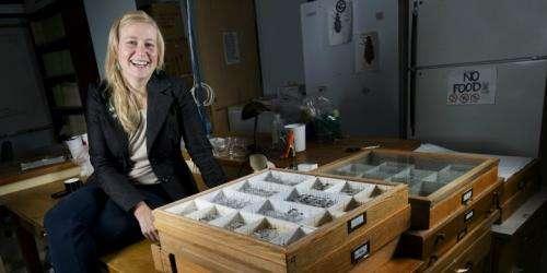 Deadwood discovery reveals new beetle species