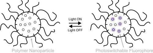 Designing tiny molecules that glow in water to shed light on biological processes
