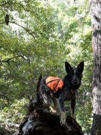 Detection dogs spot northern spotted owls, even those alarmed by barred owls