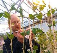 Discovery may allow plant breeders to 'switch off' flower production