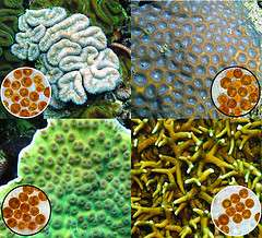 DNA analysis aids in classifying single-celled algae