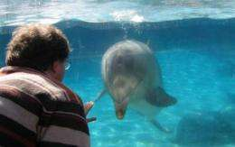 Do dolphins think nonlinearly?