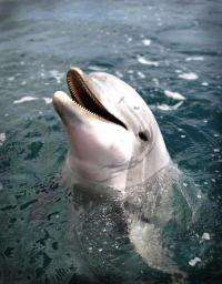 Dolphins can remain alert for up to 15 days at a time with no sign of fatigue
