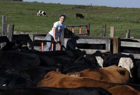Drought creating waves of uncertainty for livestock producers