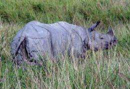 Eastern Assam is home to the world's largest concentration of one-horned rhinos