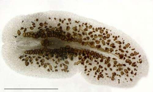 Elusive coral predator discovered in the wild