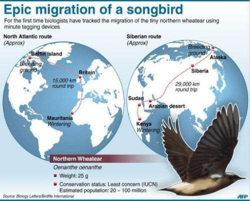 Epic migration of a songbird