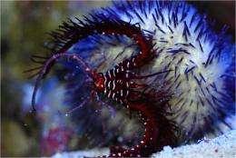 Escalating arms race: Predatory sea urchins drive evolution
