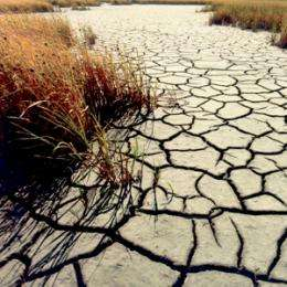 Extreme summer temperatures occur more frequently: study