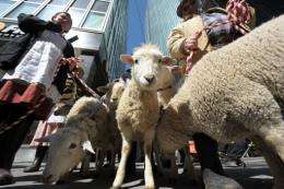Farmers and their sheep parade along Park Avenue during an event for Zynga's FarmVille game, in New York in 2011