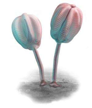Scientists discover unusual 'tulip' creature