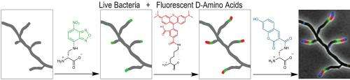 Filming bacterial life in multicolor as a new diagnostic and antibiotic discovery tool