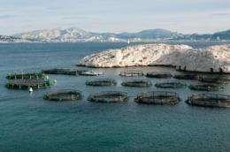 Finding an alternative to feeding fish fish