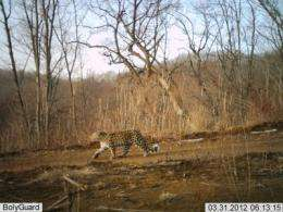 First camera trap photos of rare leopard in China