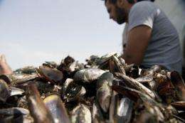 Fishermen sort mussels