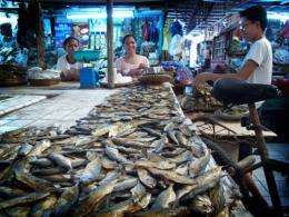 """Fish on sale in the Philippines. where about 400 fish-farmers are to use """"tobacco dust"""" to kill predators"""