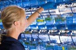 Fish study raises hope for spinal injury repair