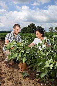 Focusing on flood-tolerant soybeans