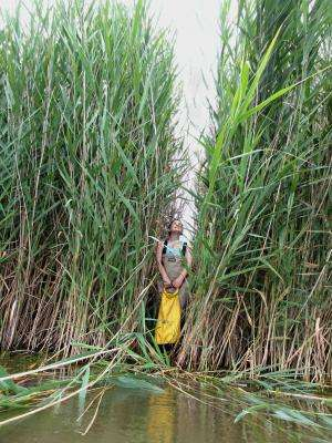 Following Phragmites home: Satellite data helps map the spread of an invasive reed