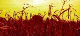 Food crops damaged by pollution crossing continents