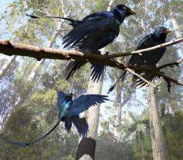 Four-winged dinosaur's feathers were black with iridescent sheen