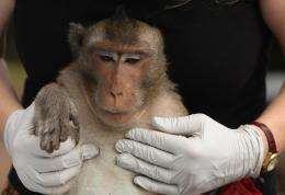 From the mouths of monkeys: New technique detects TB